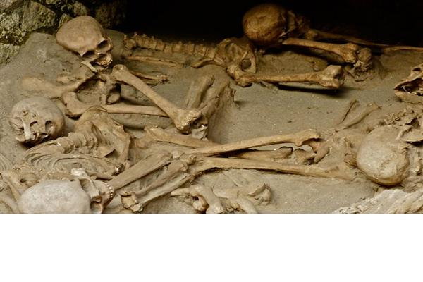 Biological Anthropology and Archaeology - Trent University